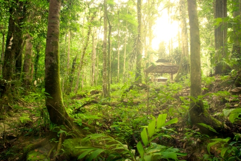 Malaysian Borneo Rainforest Jungle
