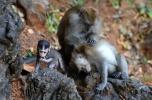 Monkeys playing in Malaysia