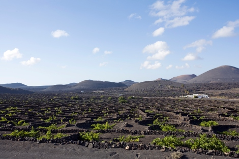 Canary Islands Travel Wine