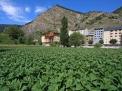 Andorra - Tobacco plantation