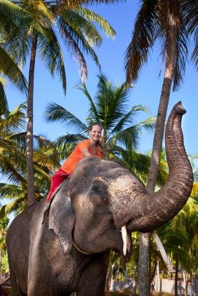 Elephant Rides in Kerala