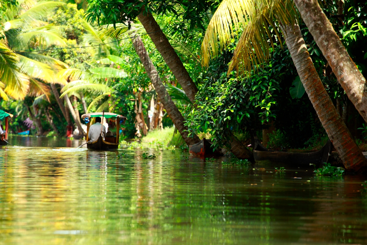 Kerala Backwaters Jungle
