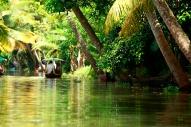 Kerala Backwaters Jungle