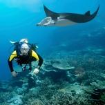 Diver and manta