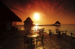 tropical cafe
