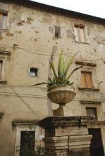 Pitigliano Street Plant