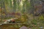 Fall Colors in Oak Creek Canyon Sedona