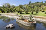Pond with palm trees in botanical garden Madeira