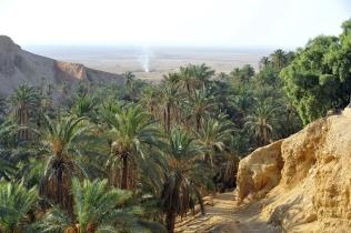 Tunisia- Oasis Chebika