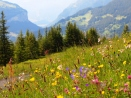 Beautiful meadow in the Alps